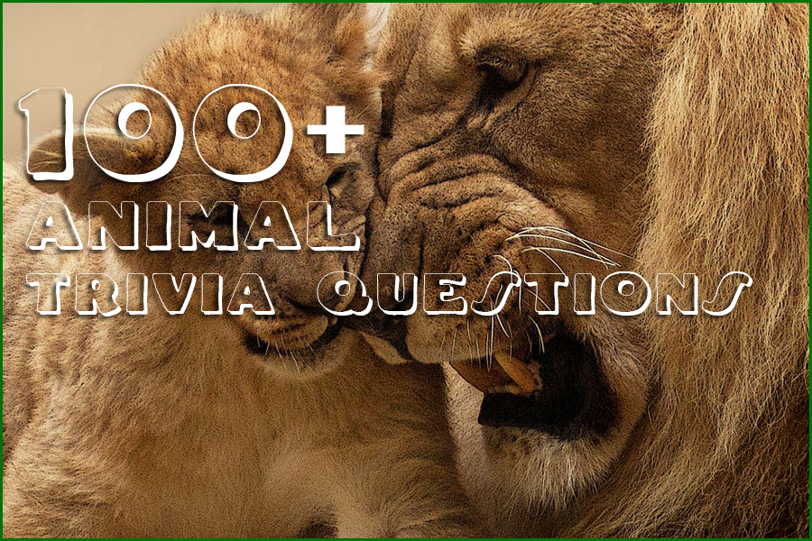 100+ Animal Trivia Questions with Answers